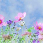 linguaggio_dei_fiori